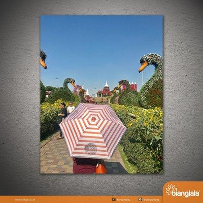 content IG payung miracle garden dubai 1